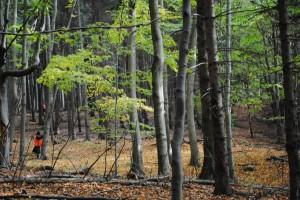 Nasz piękny las.